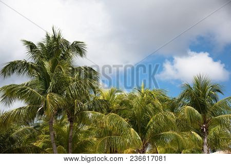 Palm Trees Against Blue Clouded Sky