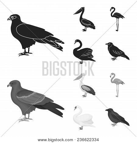Kite, Pelican, Flamingo, Swan. Birds Set Collection Icons In Black, Monochrom Style Vector Symbol St