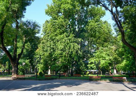city park in summer, bright sunlit, green trees and shadows