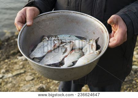 Fisherman holds an alominium bowl with breams