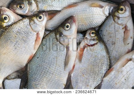 Pile of bream fish shot from above, close-up