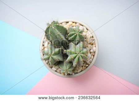 Beautiful Cactus On Color Background, Top View