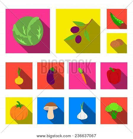 Different Kinds Of Vegetables Flat Icons In Set Collection For Design. Vegetables And Vitamins Vecto