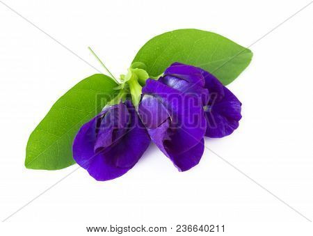 Top View Butterfly Pea Flower On White Background, Herb And Medical Concept