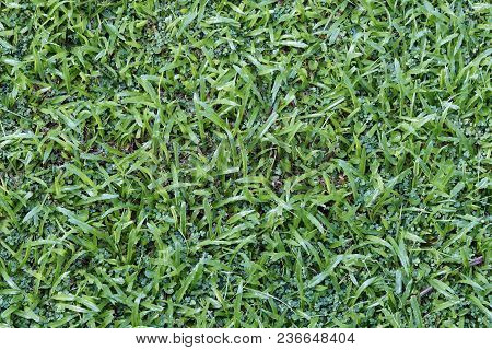 Vibrant Green Lawn After The Wet Season
