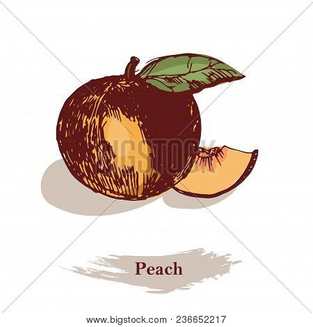 Peach Illustration. Vintage Ink Hand Drawn Peach On Grunge Background.detailed Vegetarian Food Sketc