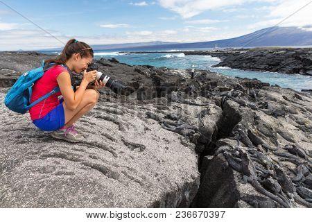Galapagos tourist photographer taking photos of Marine Iguanas on Fernandina Island, Espinoza Point. Amazing wildlife, nature and animals on Galapagos Islands, Ecuador, South America.