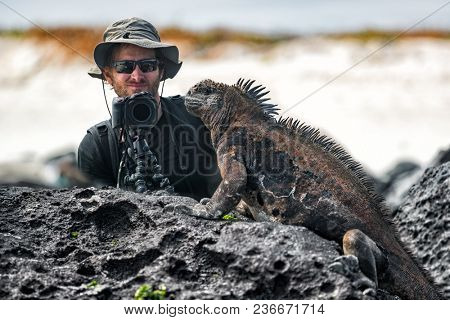 Galapagos Iguana and tourist nature wildlife photographer taking picture. Marine Iguana shaking and bobbing its head showing threat and dominance. Marine iguana on Isabela, Galapagos Islands, Ecuador