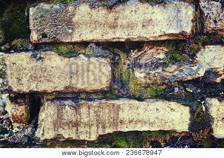 Wet Cracked Old Brick Wall With Moss Close Up. Abstract Background.