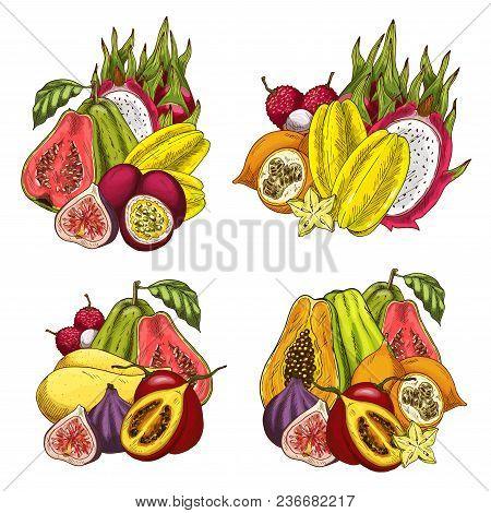 Exotic Fruit Bundle Sketch Of Tropical Farm Product. Papaya, Mango And Fig, Dragon Fruit, Carambola