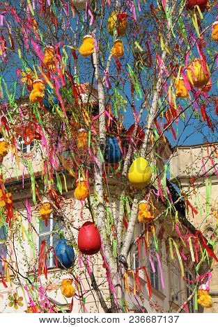 Easter Eggs Hang On A Birch Tree. Feast Of Easter.