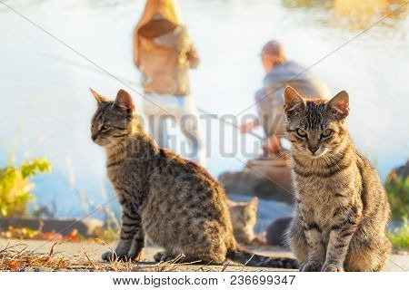 Two Stray Gray Cat On A Fishing Near The River. Focus On The Foreground, Background Blurred