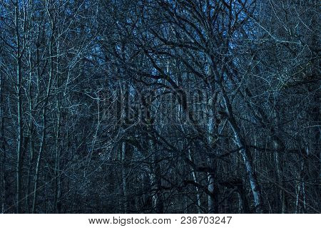 Scary And Exciting Background Trees At Night In The Forest High And Mysterious With Thin Branches Ve