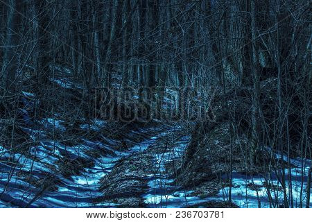 Mysterious Path In The Night Forest Around The Thin Branches Of Fantastic Trees Scary And Exciting N
