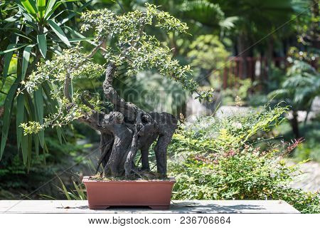 Bonsai Tree In A Pot With Vegetation In The Background In Baihuatan Public Park, Chengdu, China