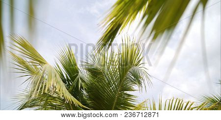 Leaves Of A Palm Tree. Palm Trees Against The Sky. A Palm Leaf.