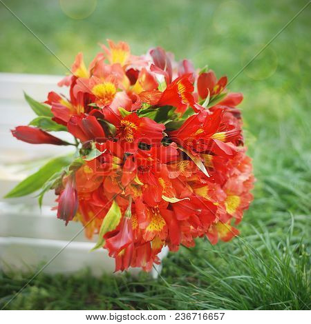 Red Orange Beautiful Alstromeria Lily Flower Bouquet Green Grass Natural Background. Toned. Spring S