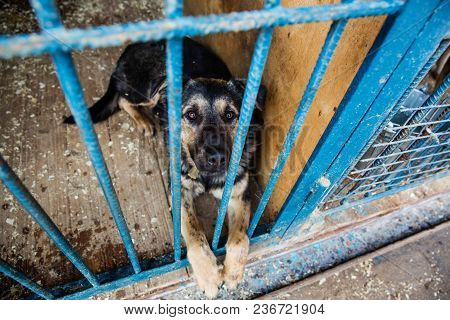 Dog In The Cage In Animal Shelter