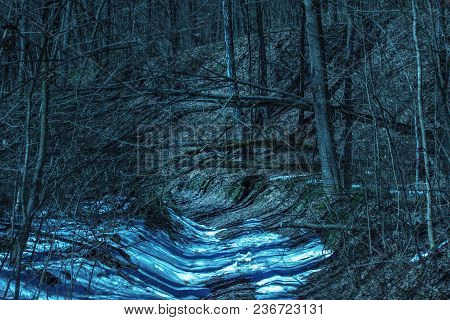 Path In A Magical Night Forest With Mysterious Trees No One Around Just The Wilderness