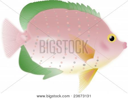 Pink Tropical Fish