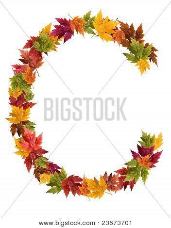 The letter C made from autumn maple tree leaves