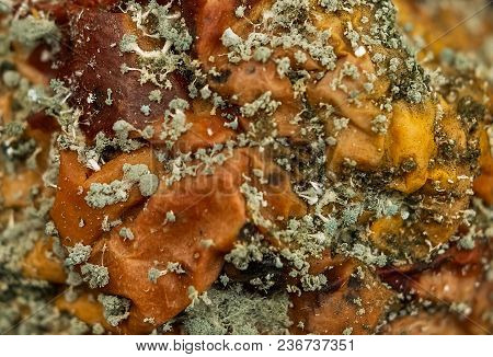 Mold Spores On Rotten Apple, Close Up View