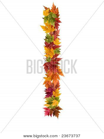 The letter I made from autumn maple tree leaves