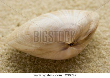 Seashell On Sand