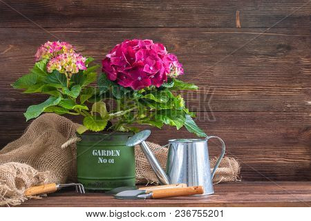 Purple Hydrangea In A Vintage Pot With Garden Instruments And An Iron Watering Can, With A Copyspace
