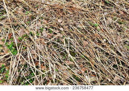 Texture Of Old Rotten Old Sticks, Branches, Straws With Knots And Dry Leaves With Cracks And Knots C