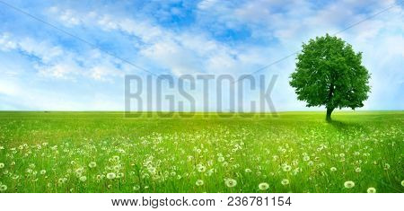 Lonely tree on the blossoming flowers field. Nature  Landscape of green meadow with white dandelions. Rural beautiful spring panorama landscape with blue sky and white clouds