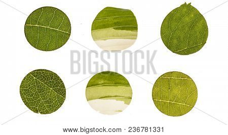 leaf circles on white