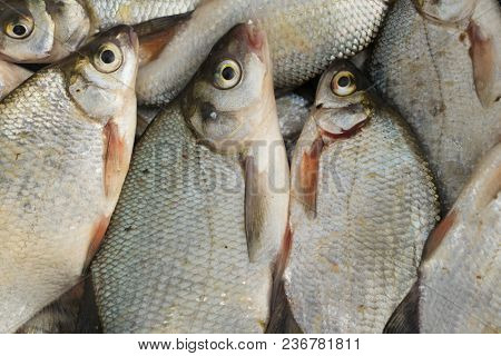 Catch of bream fish, close-up