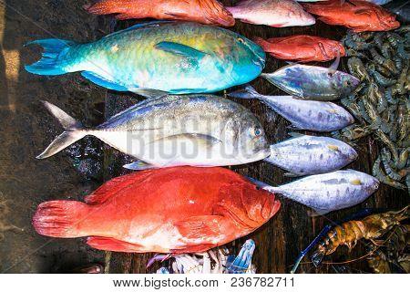 Various freshly caught fish at wooden counter on Weligama street market , Sri Lanka.