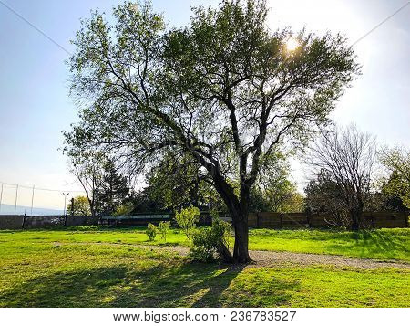 Spring Weather, Sunny Sky, Trees In The Village. Beautiful Blossom Tree. Nature Scene With Sun In Su
