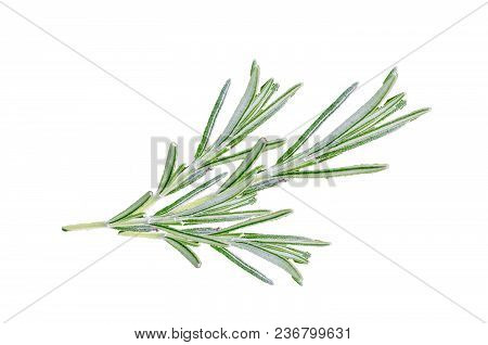 Traditionally, Sprigs Of Rosemary Are Worn On Anzac Day