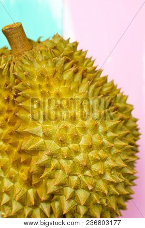 Fresh Cut Monthong Durian On Colorful Background,closeup View Of Durian,monthong Durian.mon Thong.be