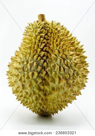 Fresh Cut Monthong Durian On White Background,closeup View Of Durian,monthong Durian.mon Thong.beaut