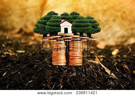 House, Trees And Coins On Nature Background Present Compare The Savings With Tree Planting. Or Savin