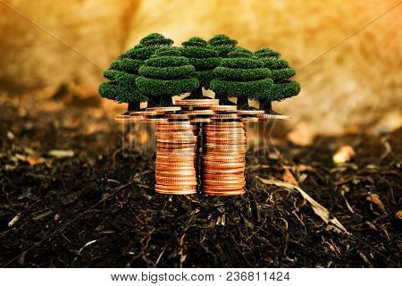 Trees And Coins On Nature Background Present Compare The Savings With Tree Planting. Or Savings To B