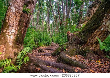 Scenic View Of Path Through Beautiful African Jungle With Lush Foliage