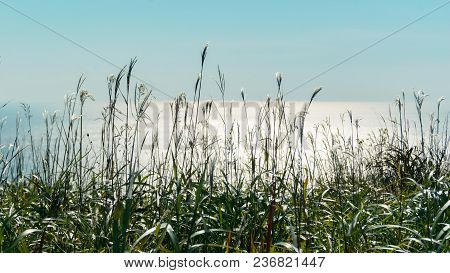 Beautiful View Of Green Grass Near Blue Sea On Sunny Day