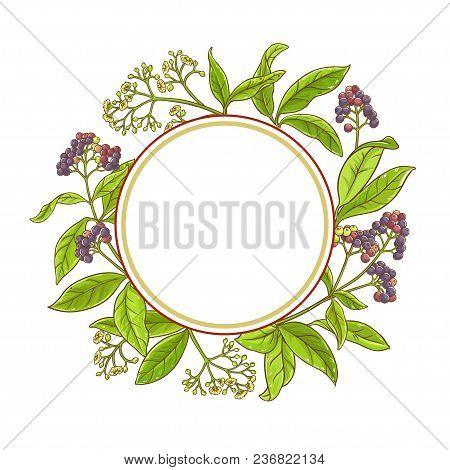 Allspice  Branch Vector Frame On White Background
