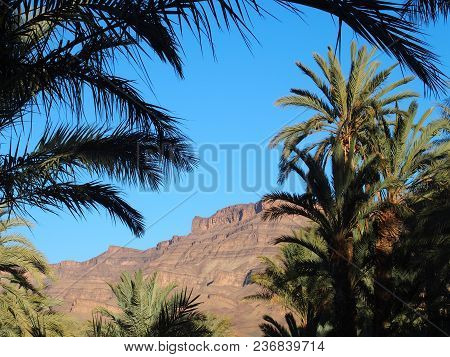 Scenery Of Green Trees In Oasis Landscapes In Central Morocco In Old Village Of Oulad Near Zagora Ci