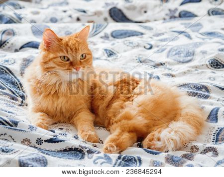 Cute Ginger Cat Lying In Bed. Fluffy Pet Comfortably Settled To Sleep Or To Play. Cozy Home Backgrou