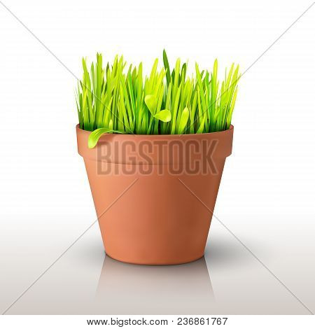 Grass In A Clay Peat Pot Isolated On White Background. Realistic Mesh Design. Vector Illustration. S