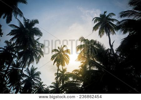 Branches Of Coconut Palms Under Blue Sky. A Tropical Sunset. The Sun Sets Behind The Palm Grove. Tro