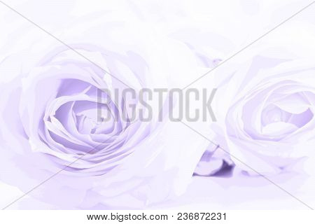 Soft Full Blown Ultraviolet Roses As A Neutral Background. Selective Focus.
