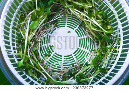 Micro Greens Grass In White Drier Top View