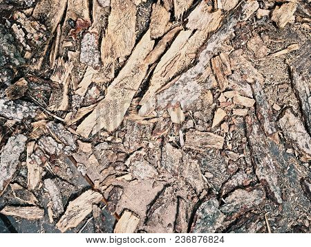 The Scraps Of Rustic Wood On The Ground, The Fragment Of Wood